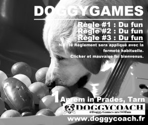 stages activités doggygames
