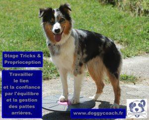 stages activités tricks et proprioception