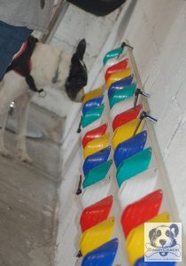 Doggywall le mur d'odeurs de Doggycoach
