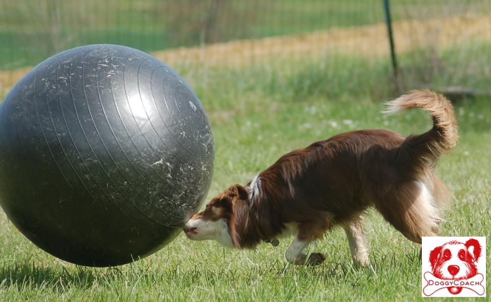 Comprendre ce nouveau sport canin