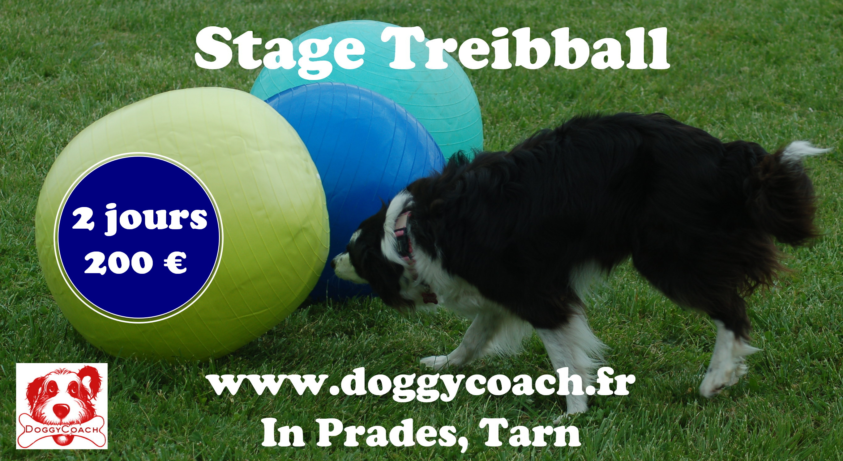 Les stages Treibball