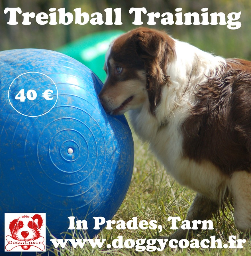 Treibball Training