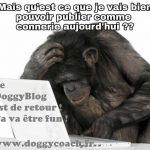doggyblog by doggycoach le retour