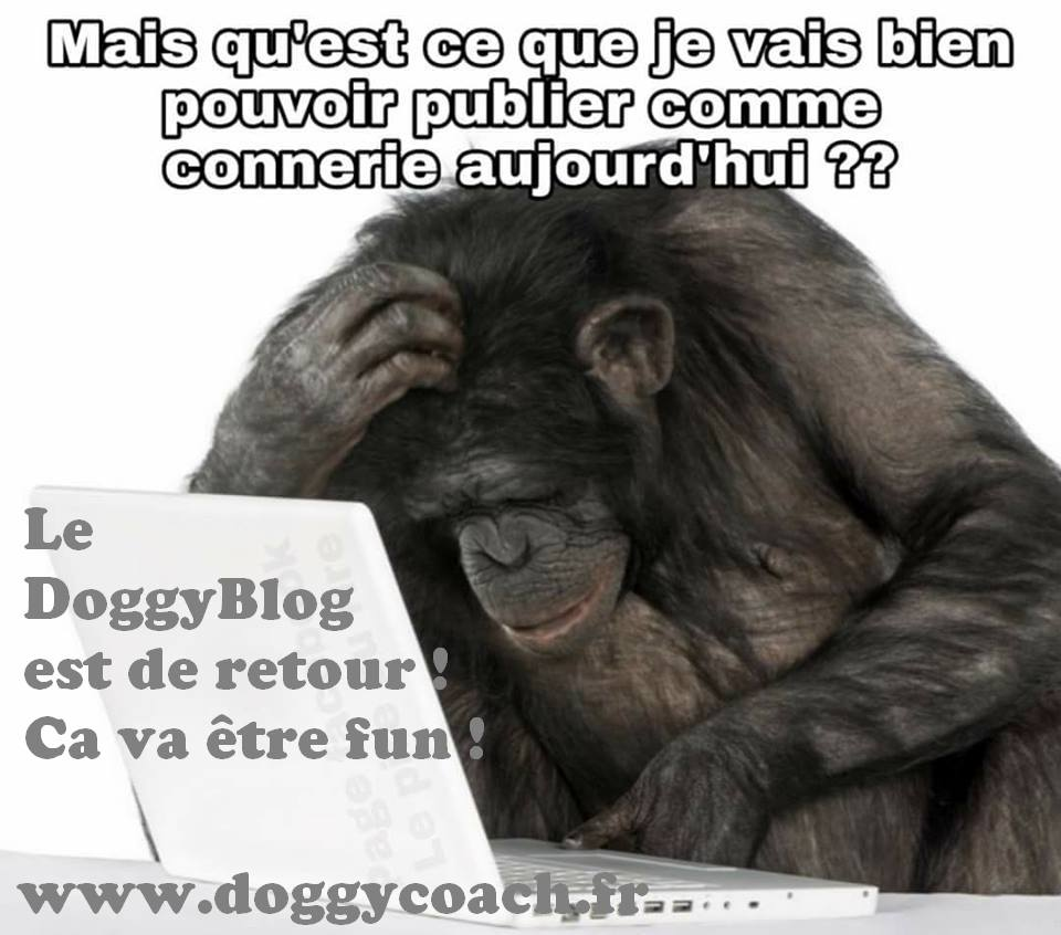 doggyblog by doggycoach le retour