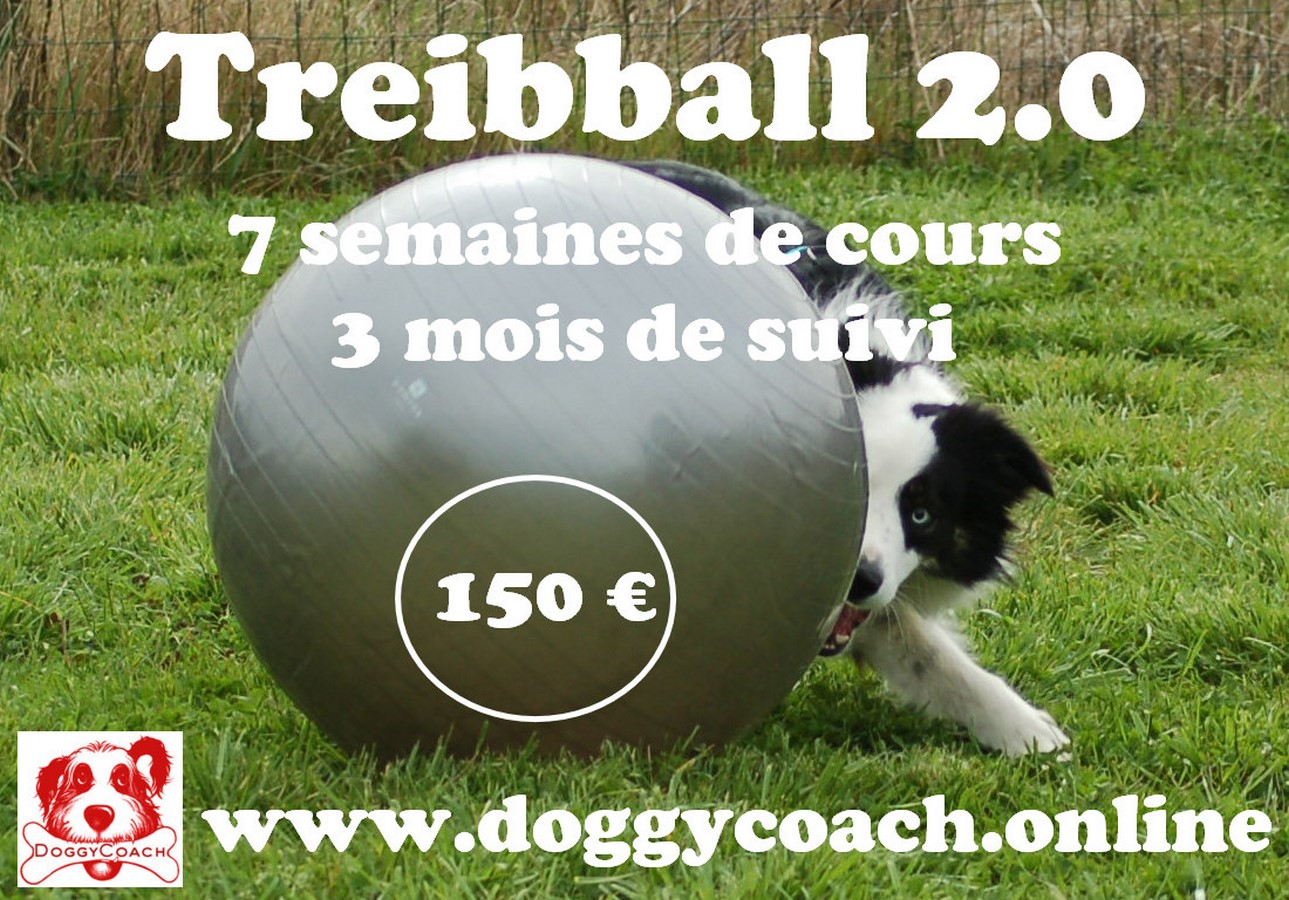 Treibball 2.0