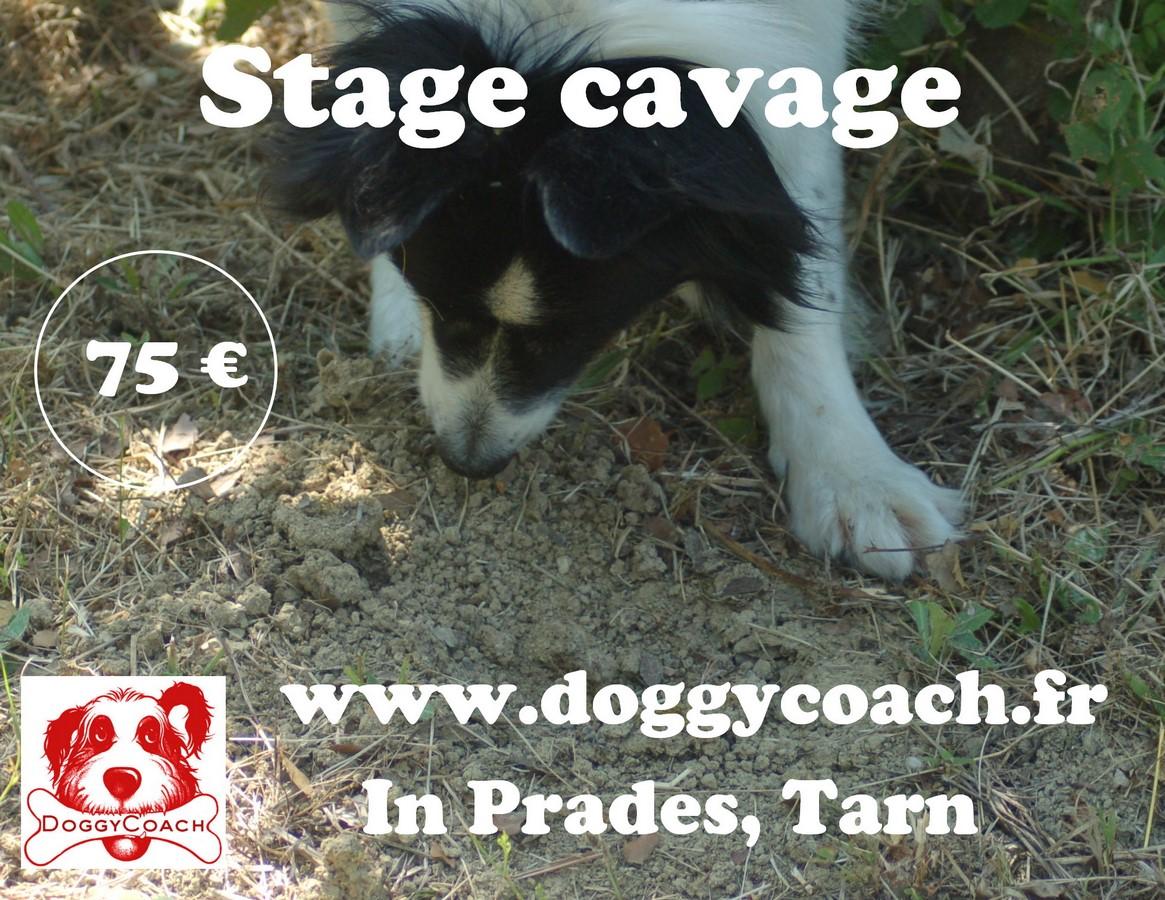 Stage Cavage