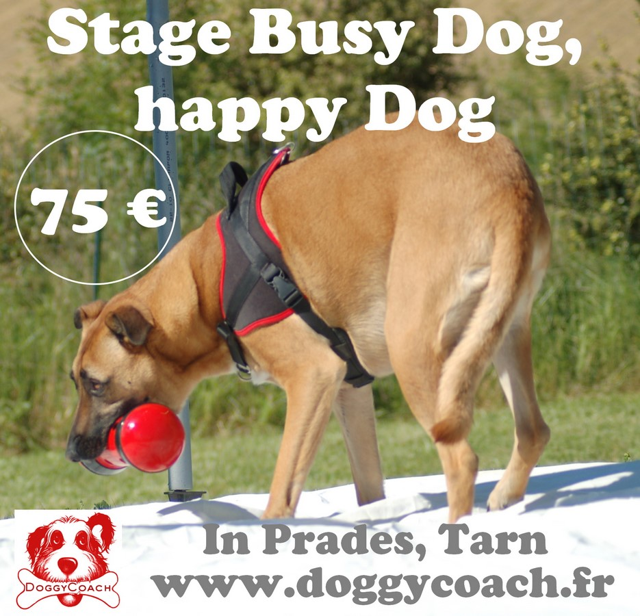Stage Busy Dog, Happy Dog