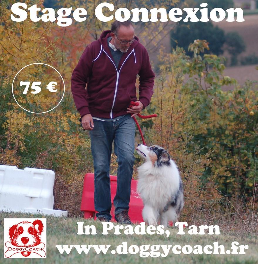Stage Connexion
