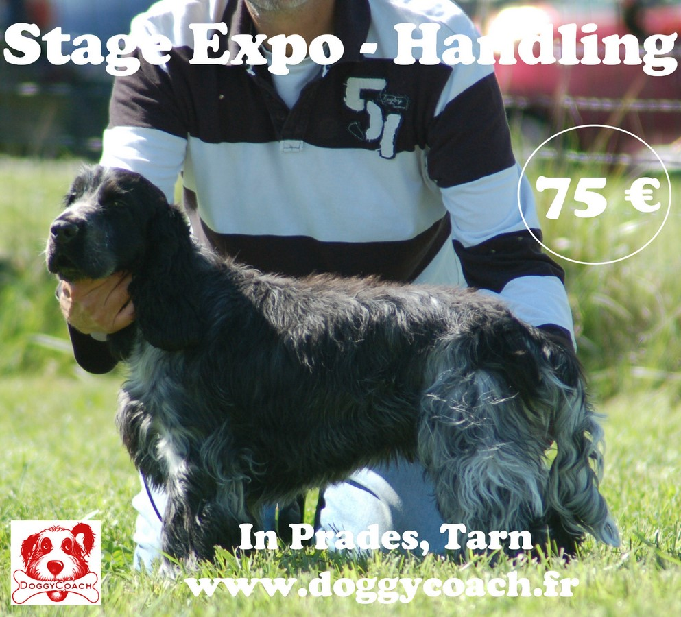 Stage Expo-Handling