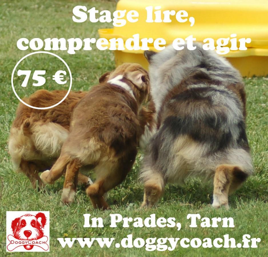 Stage Lire, comprendre et Agir